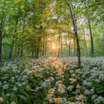forest-811352_1280